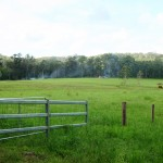 815 Acres , 20 minutes to Tin Can Bay , c/c 500 adult cattle