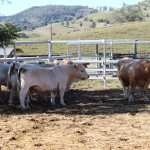 713 Acres , 18klms Gympie , c/c 400 adult cattle