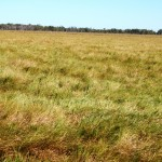 902 Acres improved Coastal Grazing c/c 300 Breeders + Progeny $1.355m