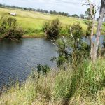 "Auction – 253 Acre ex Dairy Farm – Murgon District – this one ""has to go"" !"