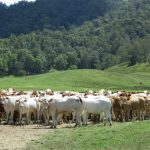 Auction 1183 Acre 'Blue Ribbon' Sunshine Coast Hinterland Mary River Property