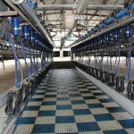 Qld's Premier Dairy for genuine sale- 4 million litres annually