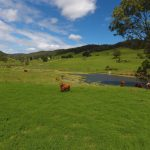247 Acres of absolutely top class pastured red country