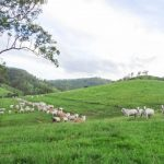 Outstanding Grazing Concern 1269 Acres -Mary Valley District