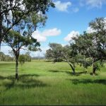 522 Acres  -'6' titles – c/c 90 adult cattle easily-$649,000