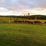 An absolutely exceptional & immaculate 5 bedroom brick homestead on a really good 100 acres -$670,000