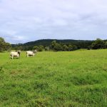 300 Acres – absolutely magnificent grazing + approved quarry $$