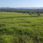 Gympie 876 Acres – Blue Ribbon Property – High c/c