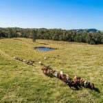Gympie-Mary Valley – 342 Acre superb grazing block – just listed for sale now !