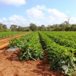 224 Acres midway between Tin Can Bay & Gympie – $650,000